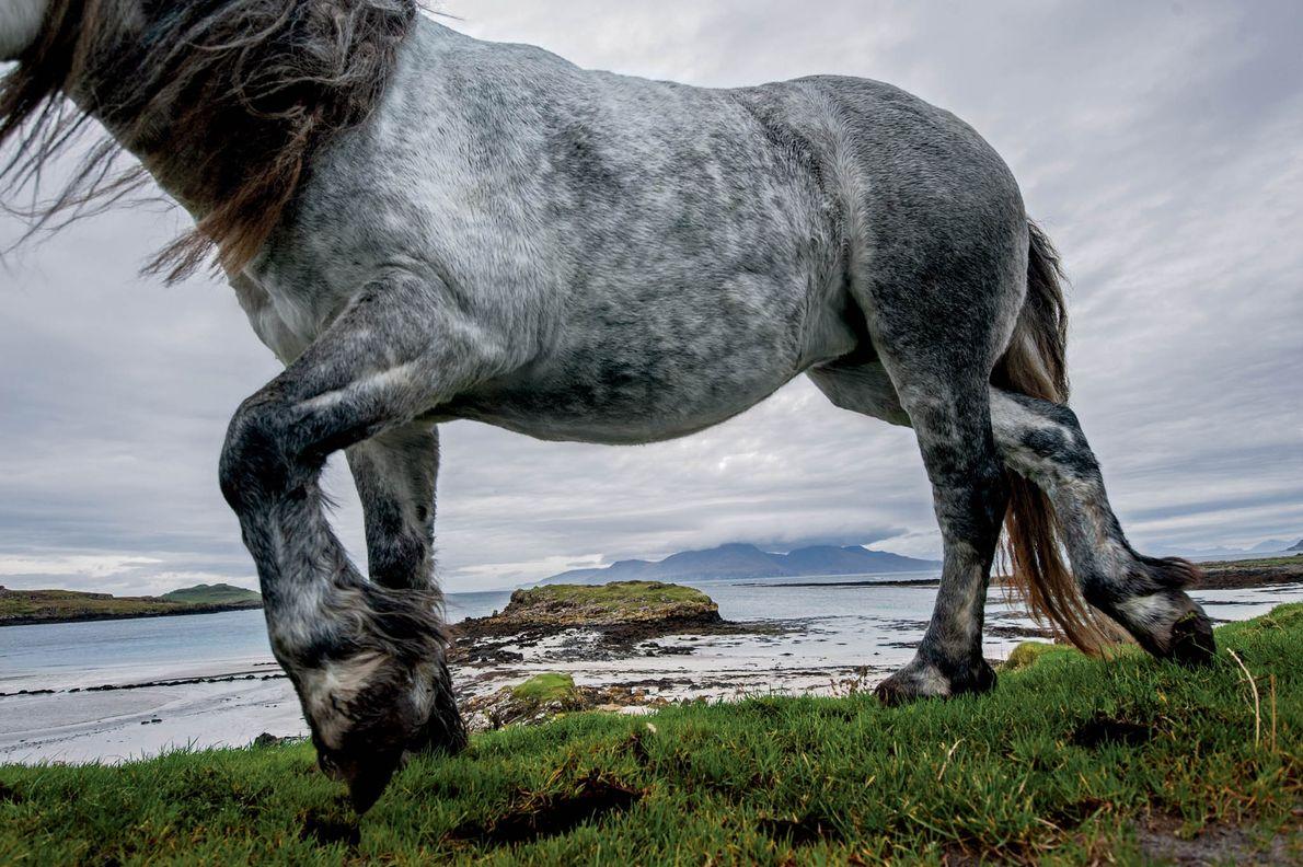 Les côtes et les plages écossaises, comme celle de l'île de Muck, sont des lieux qui ...