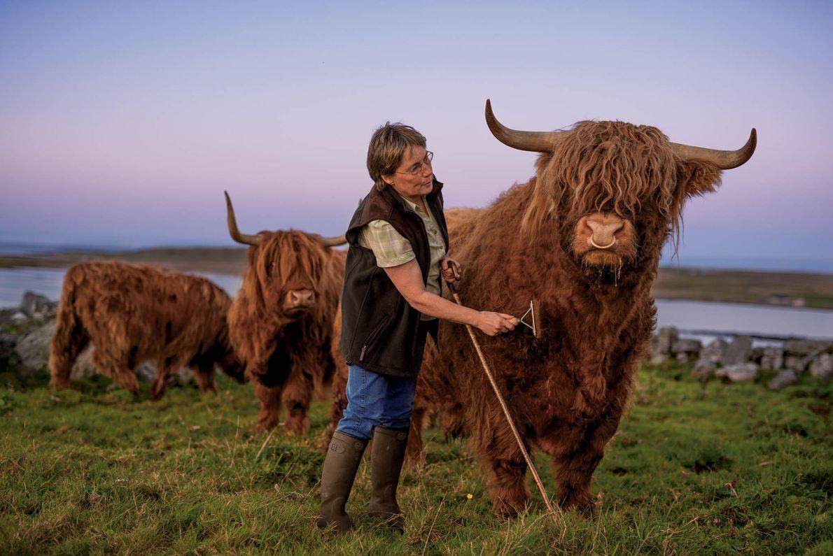 Lesley Matheson élève des bovins de race Highland pour vendre la viande à des restaurants haut ...