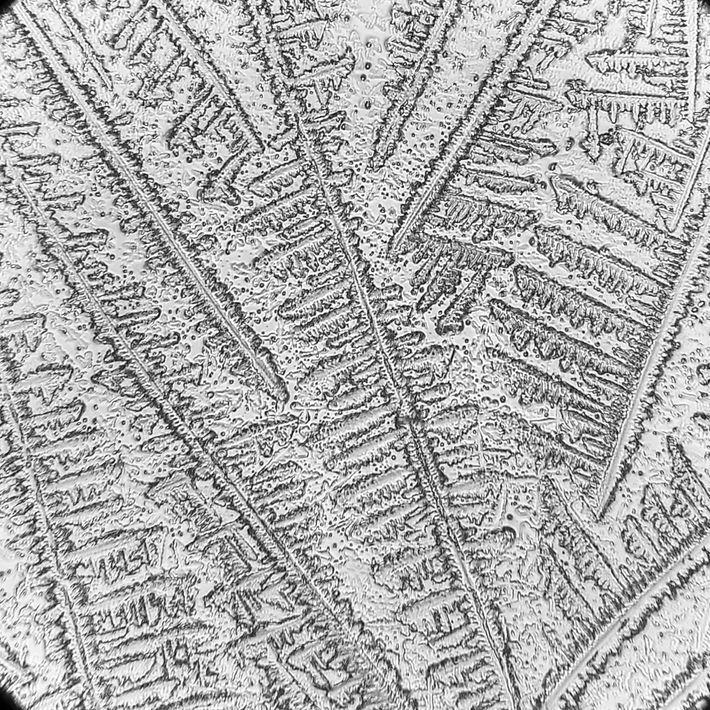 Les larmes séchées d'une tortue caouanne présentent un motif unique lorsqu'elles sont cristallisées. Ces schémas varient considérablement ...