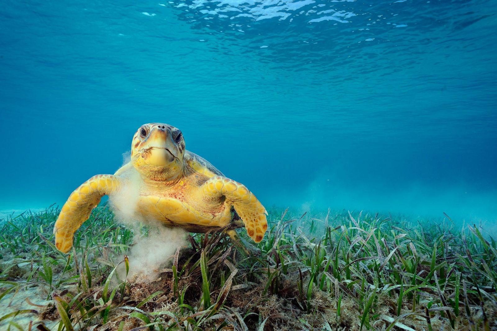La tortue de mer peut transporter plus de 100 000 petits animaux sur sa carapace