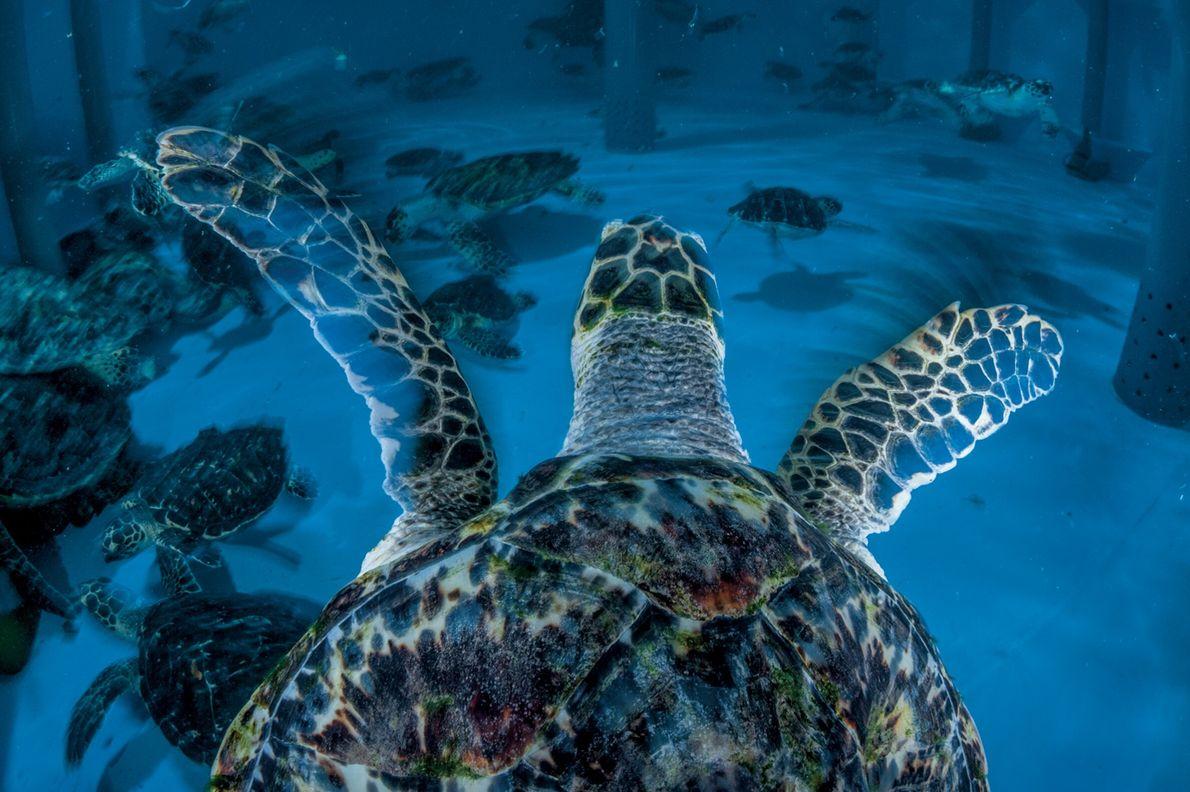 Ce centre de réhabilitation des tortues de mer situé à l'intérieur de l'un des hôtels les ...
