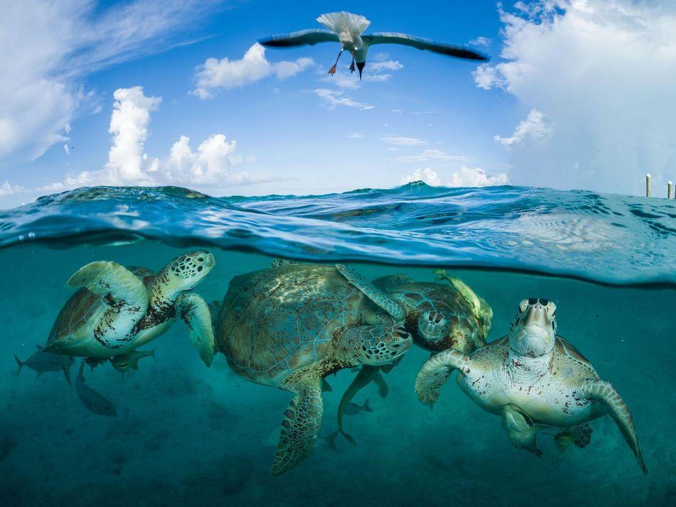 Les tortues marines survivent... malgré nous