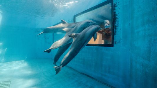 France : fin des cirques itinérants, des delphinariums et élevages de visons
