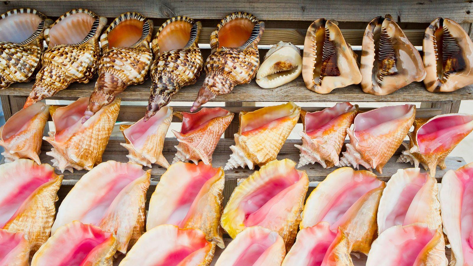 De nombreuses espèces de mollusques marins sont pêchés pour leur coquillage, qui est ensuite vendu comme ...