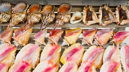 Comment le commerce de coquillages condamne la vie marine