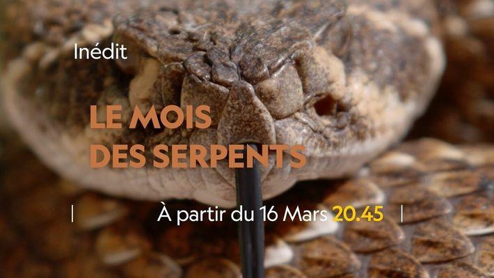 Le Mois des Serpents | Bande annonce