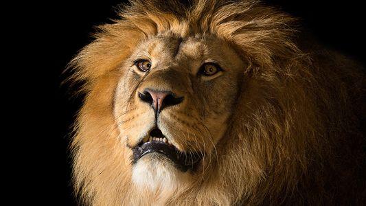 En septembre sur National Geographic Wild