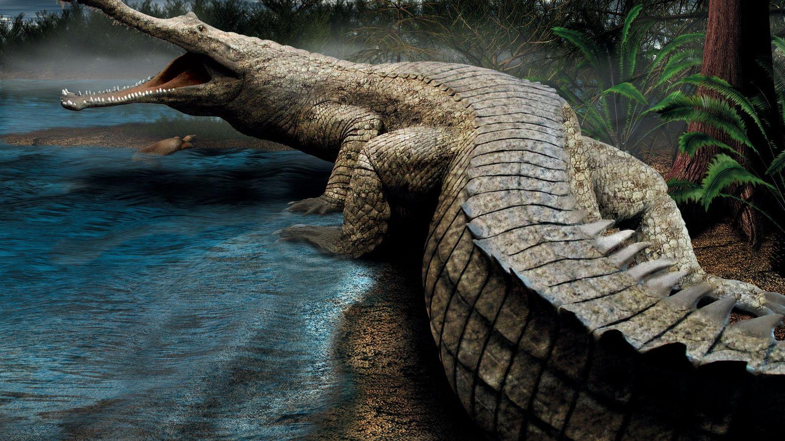 Sarcosuchus imperator, surnommé SuperCroc, était une créature de l'ère du Crétacé qui pesait près de 8 ...