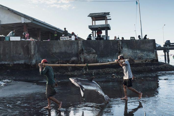 Des pêcheurs déchargent un requin à Tanjung Luar, sur l'île indonésienne de Lombok. Le pays est un ...
