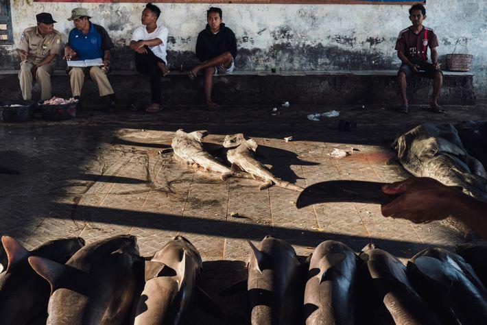 Commissaires-priseurs, employés du marché aux poissons, acheteurs et badauds attendent le début de la vente aux ...