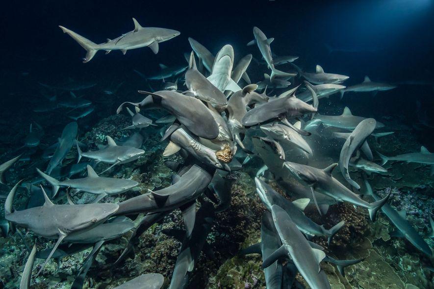 Ce photographe a passé 3 000 heures sous les mers pour s'approcher au plus près des ...