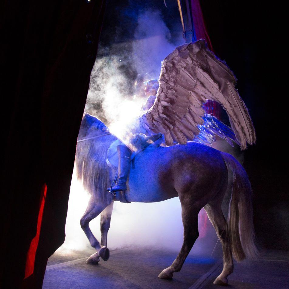 Aux États-Unis, les animaux de cirque pourraient bientôt être remis en liberté - 2