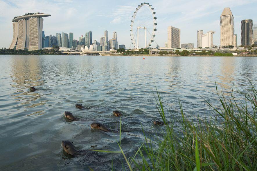 La famille Bishan fait quelques brasses au large de Marina Bay avec l'emblématique skyline de Singapour ...