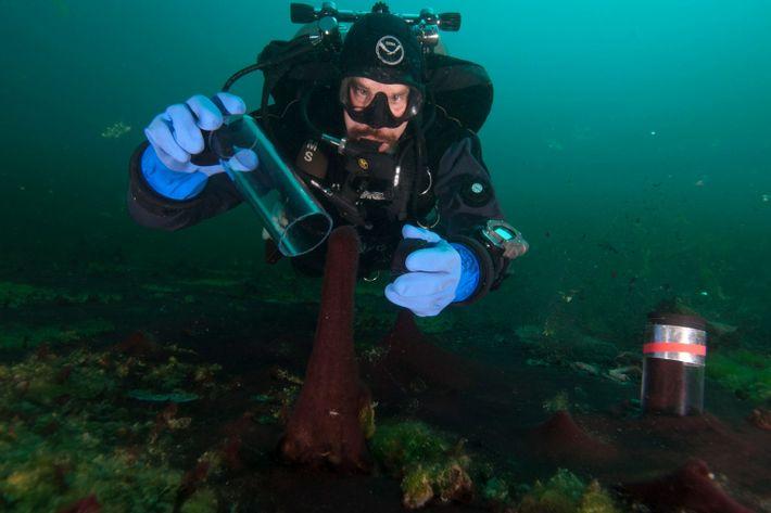 Diver II