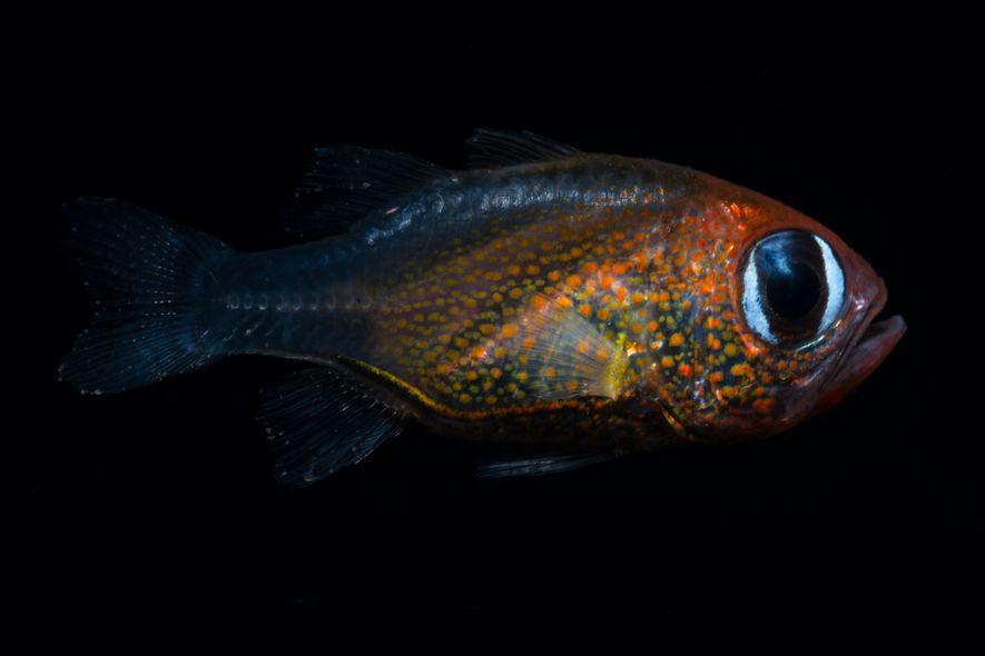 71 nouvelles espèces ont été découvertes en 2019