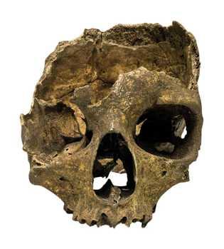 En 1996, un crâne humain est retrouvé dans une grotte à Punta de Europa, le point ...