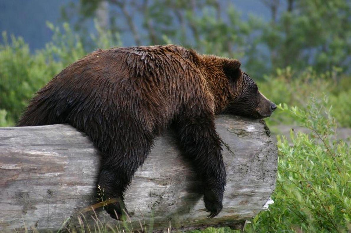 « Lors d'un voyage en Alaska, j'ai fait une halte dans l'Alaskan Wildlife Refuge où j'ai ...