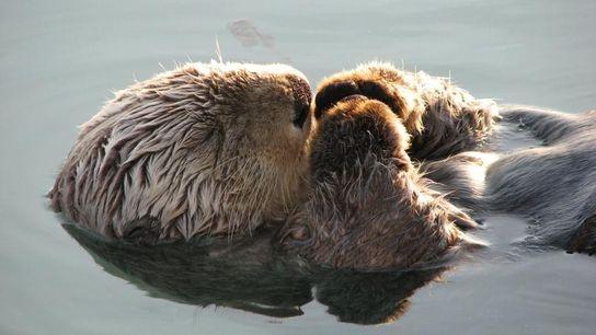 « Je suis tombée sur ce petit bonhomme profondément assoupi sur le quai de Valdez, en ...