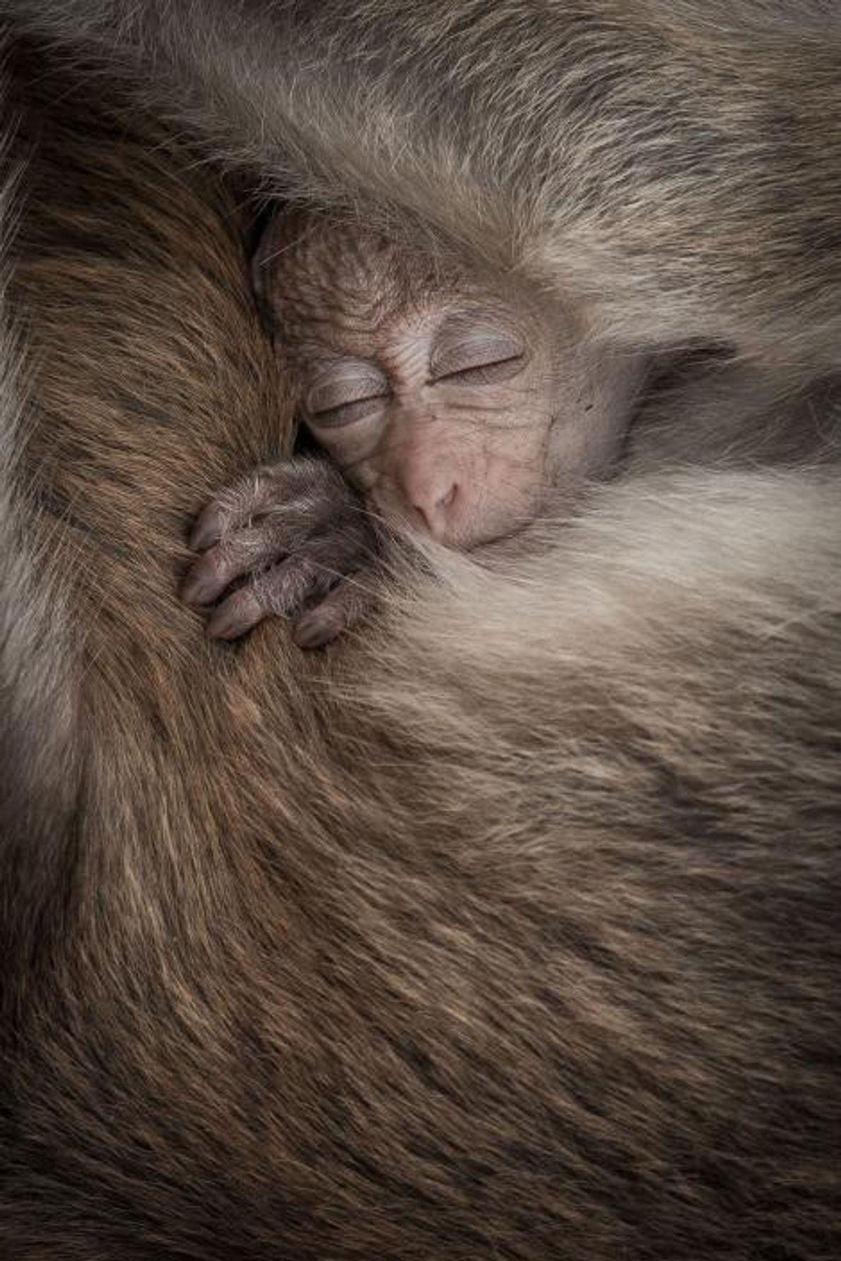 Senthi Aathavan Sethiverl, photographe de la communauté Your Shot, a capturé l'instant partagé entre un bébé ...