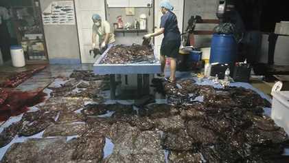 Cette baleine est morte après avoir ingéré plus de 9 kilos de plastique