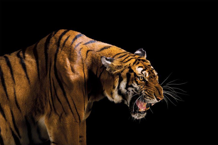 La CITES, dernier rempart pour sauver les espèces rares
