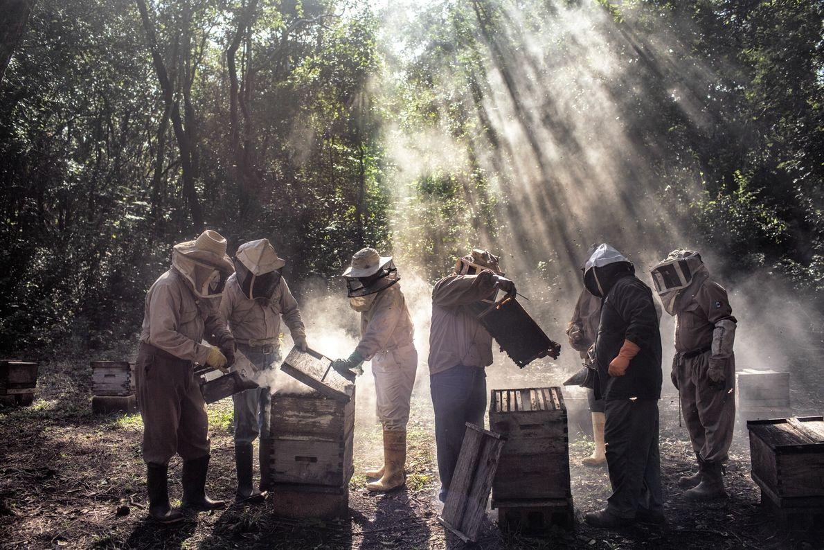 À Tinun au Mexique, un groupe d'apiculteurs entretient ses ruches à la saison morte. Les fleurs ...