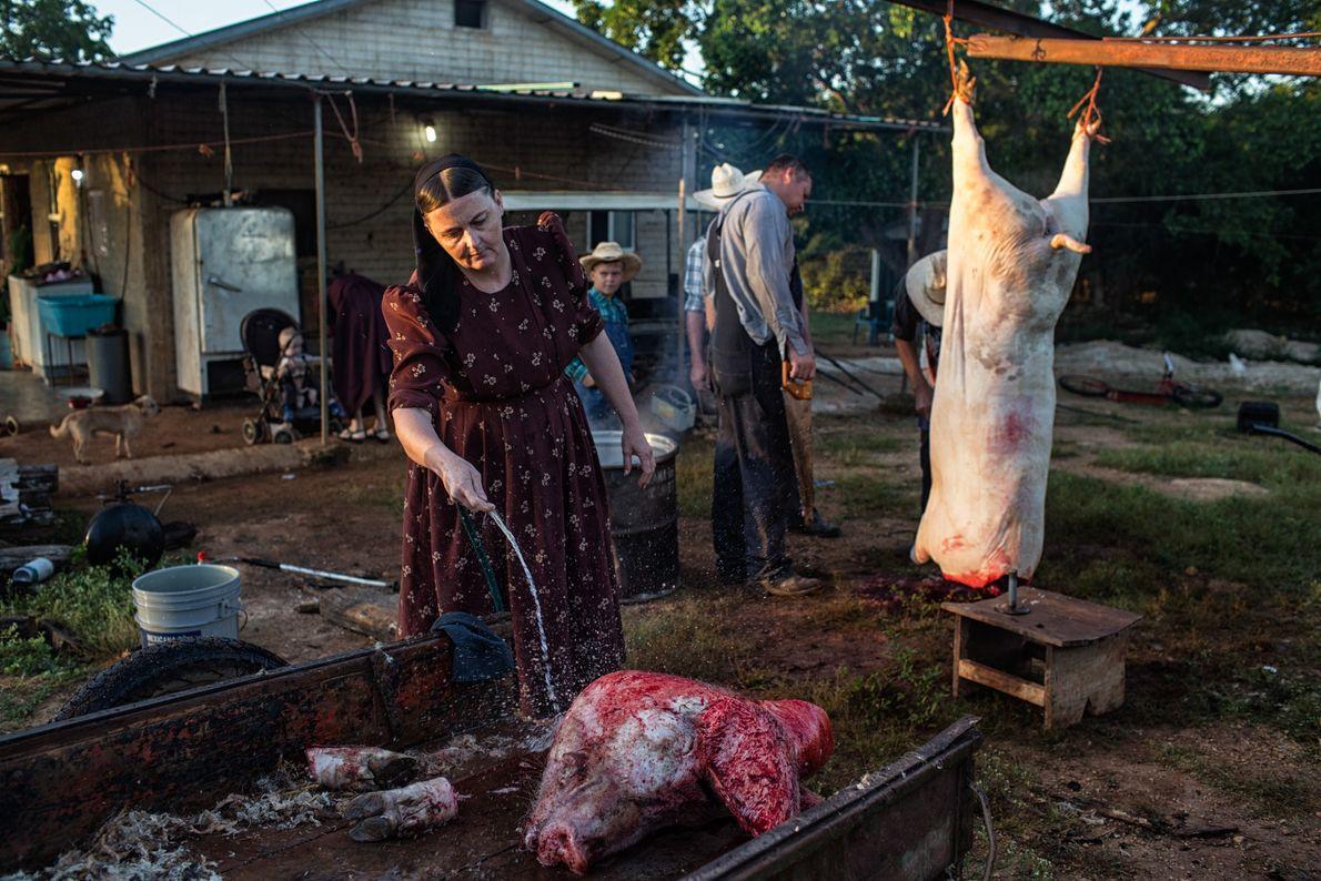 Ana Ham nettoie une tête de cochon dans le camp mennonite de Temporal au Mexique. La ...