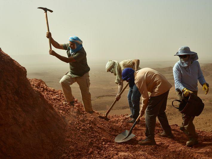 Pelles et pioches font voler la terre en tous senssur le site de Zrigat au Maroc, ...