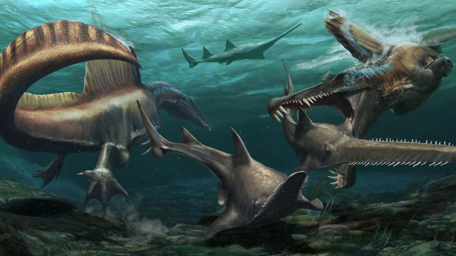 Deux Spinosaurus aegyptiacus pourchassent des poissons-scies préhistoriques, Onchopristis, dans les eaux d'un système fluvial qui parcourait le Maroc ...