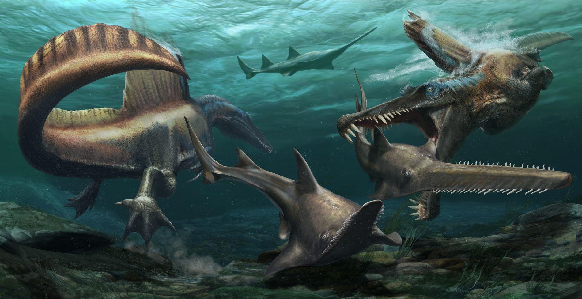 Le Spinosaurus, premier dinosaure semi-aquatique confirmé