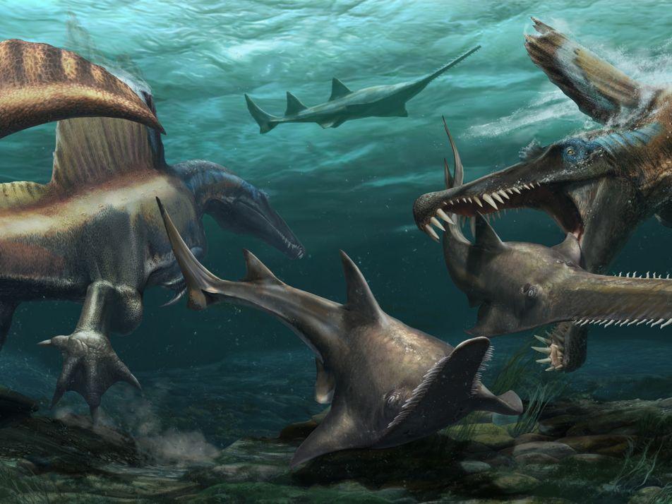 Découverte : le mystérieux Spinosaurus est le premier dinosaure semi-aquatique confirmé
