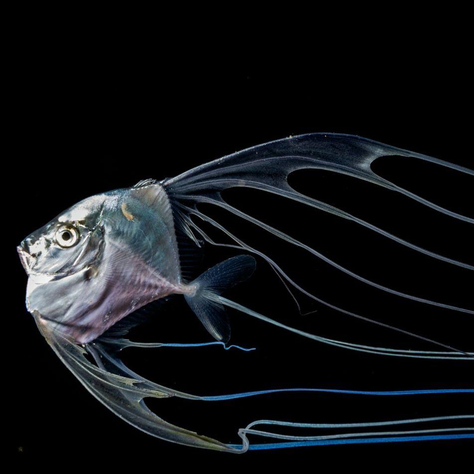 Entre transparence et luminescence, la beauté des créatures marines nocturnes