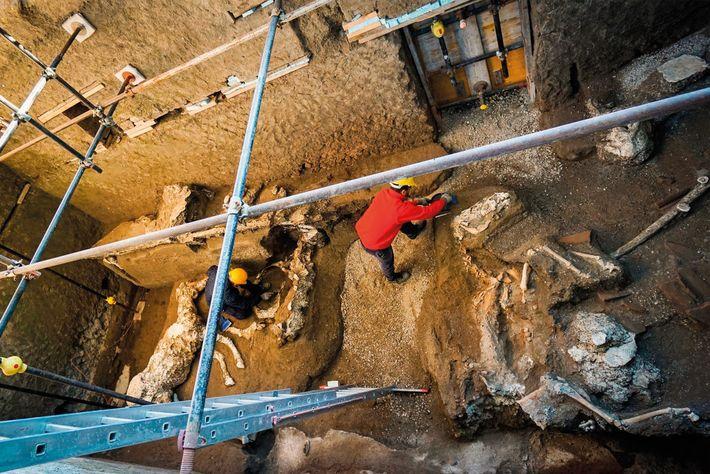 À Civita Giuliana, la banlieue de Pompéi, les archéologues ont trouvé une étable avec trois chevaux ...