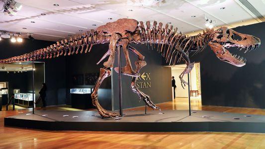 Ce squelette de T-Rex a été vendu pour 31,8millions de dollars et les scientifiques sont furieux