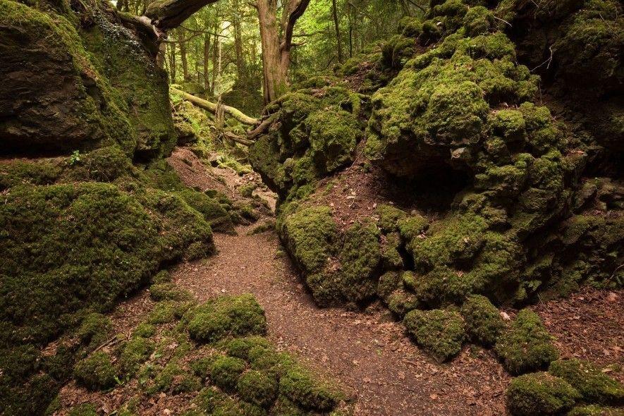 Dans le Gloucestershire, en Angleterre, l'atmosphère singulière de Puzzlewood dans la forêt de Dean a été ...