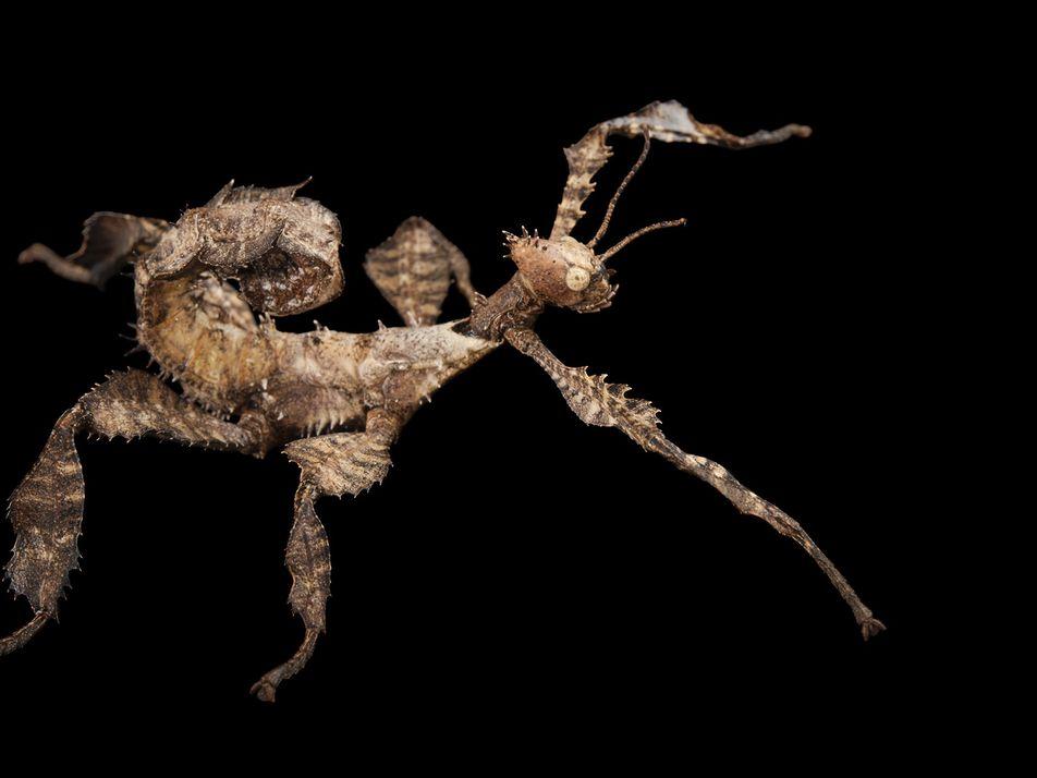 Les insectes sont en train de disparaître, mais nous pouvons encore les sauver