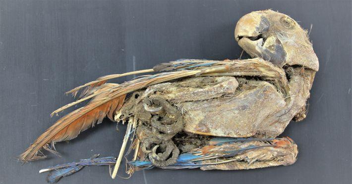 explore-BT-parrot-mummy