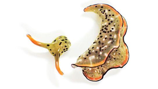 explore-07.2021-BT-sea-slug