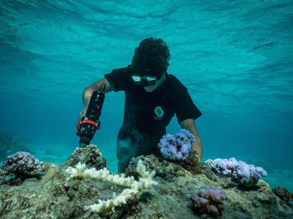 La replantation du corail en Polynésie française
