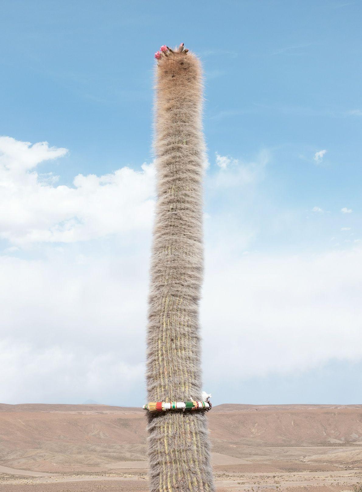 departments-11.2021-proof-warawar-cactus