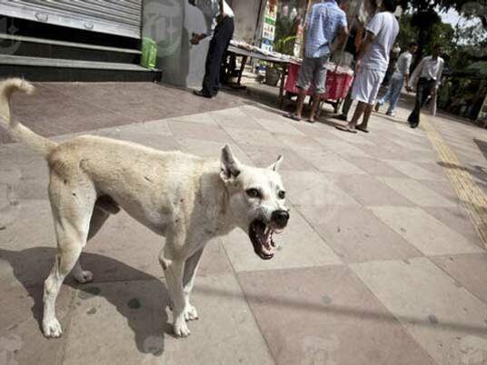 Les chiens errants, meutes incontrôlables