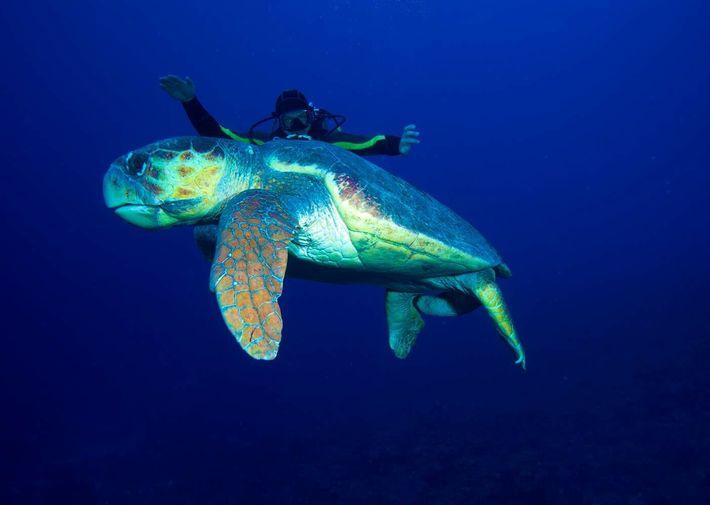 Plongeur près des côtes de l'archipel des Canarreos, à Cuba.