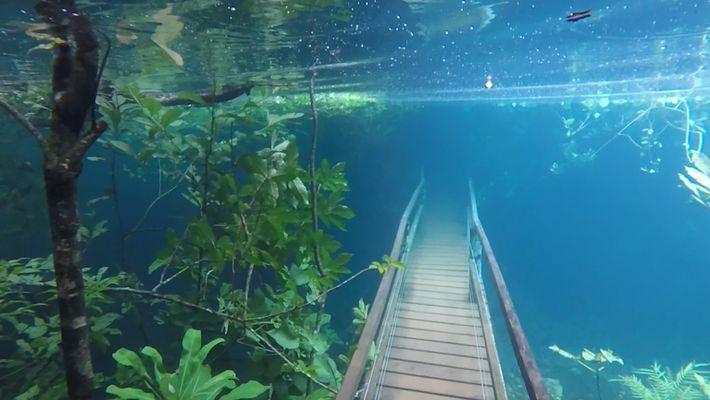 Ces poissons maintiennent les forêts en vie