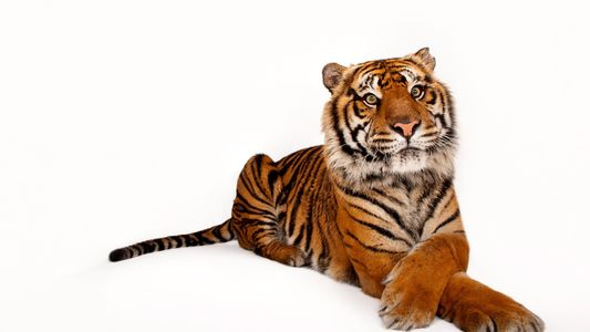 Ces 50 espèces sont menacées d'extinction