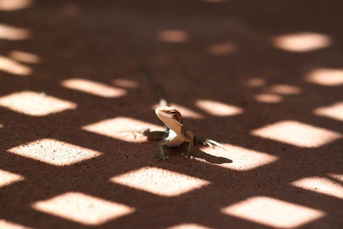 Un lézard se fraie un chemin au soleil sur un sol ombragé.