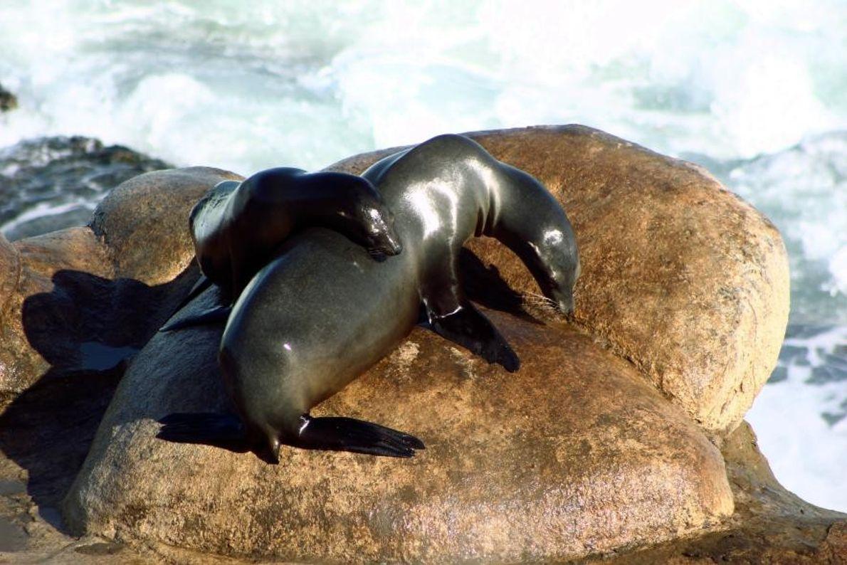 Des phoques dans le quartier de La Jolla à San Diego, dans l'État de Californie, aux ...