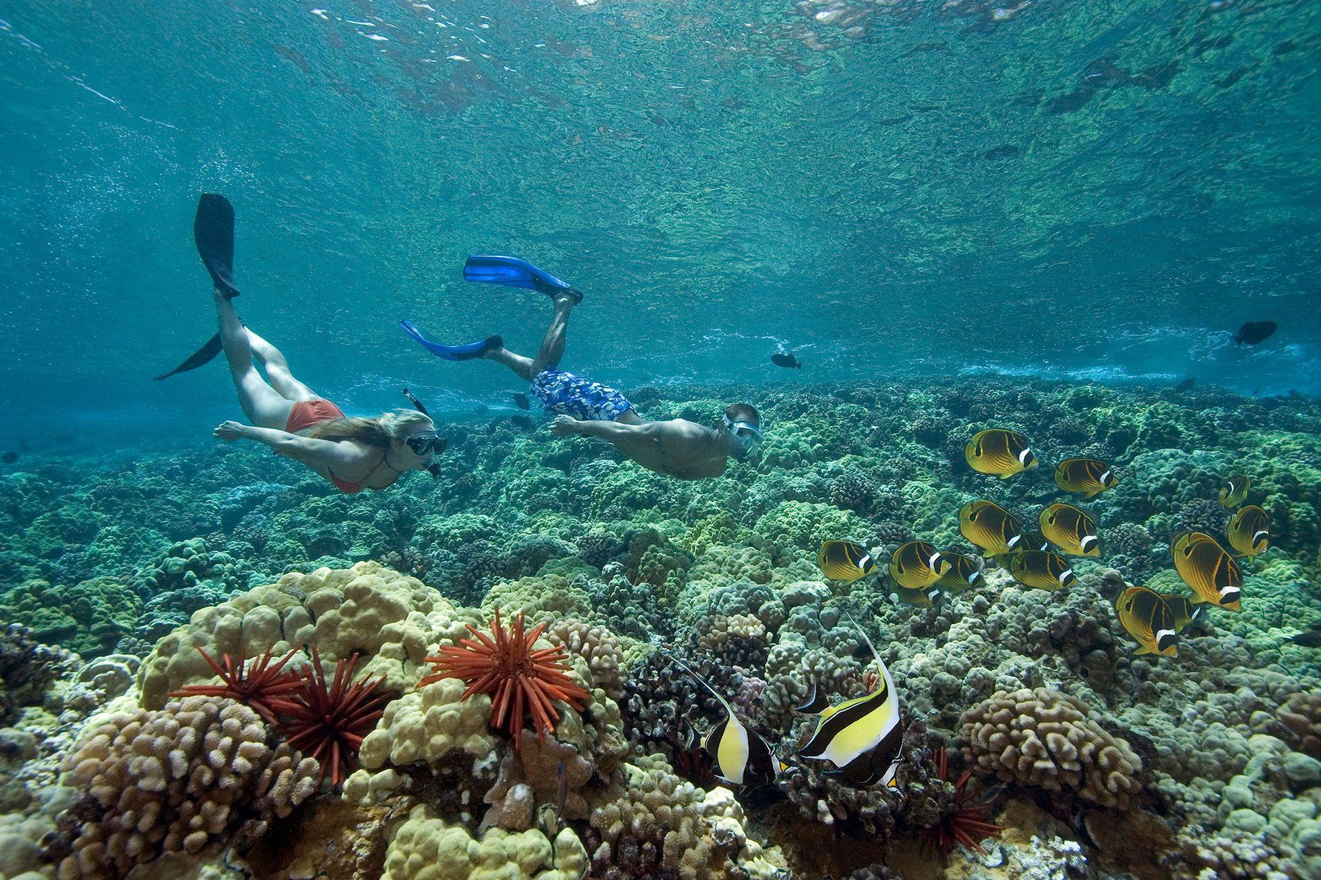 À Hawaï, deux plongeurs nagent aux côtés de zancles cornus et de poissons papillons.