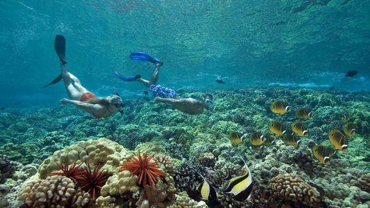 Les crèmes solaires sont nocives pour les océans (mais des alternatives existent)
