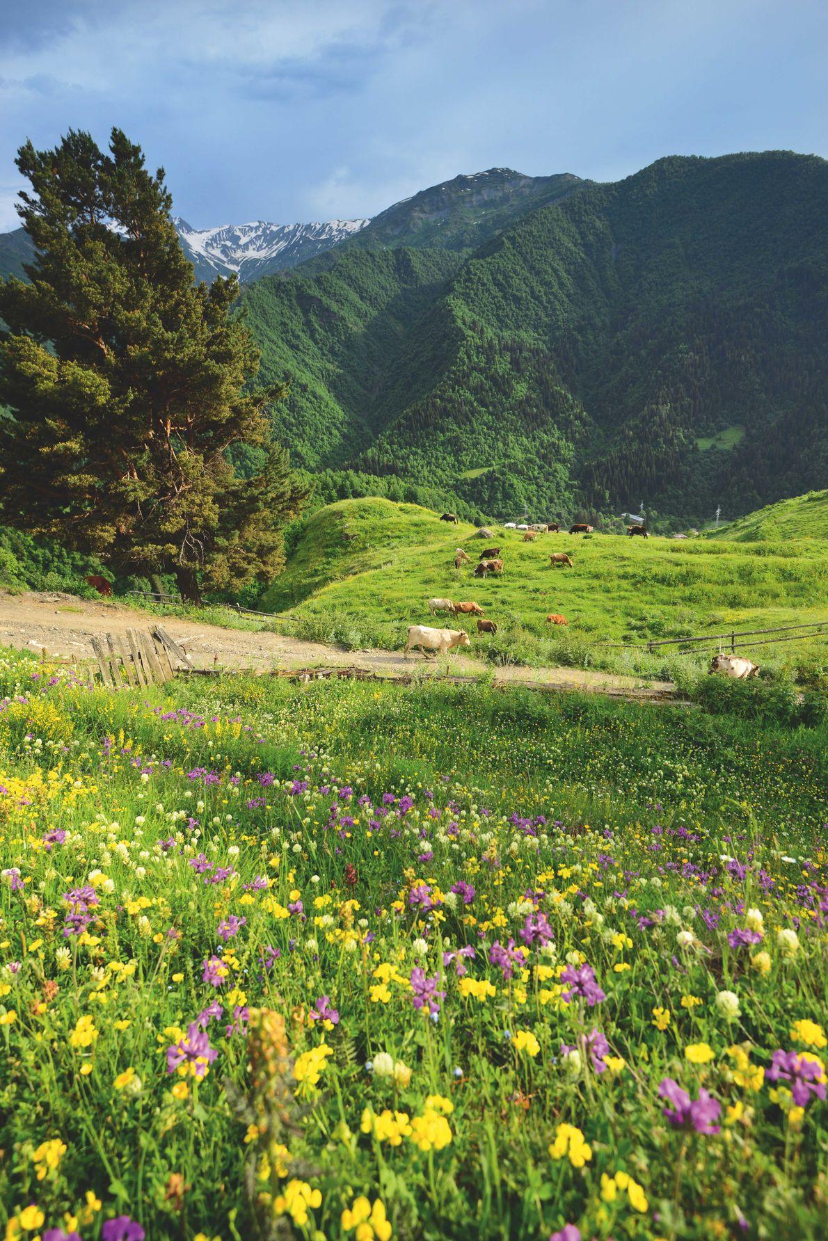 La Svanétie, Géorgie. Paysage estival à Iprari.
