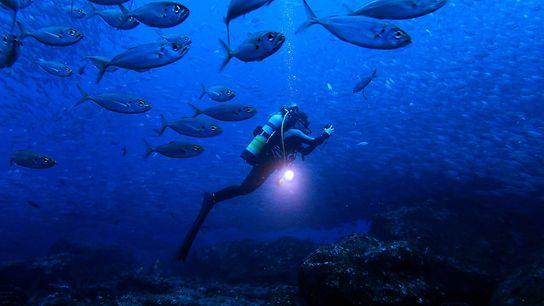 La biologiste marine Jessica Cramp nage au milieu des poissons dans les eaux des îles Galápagos.